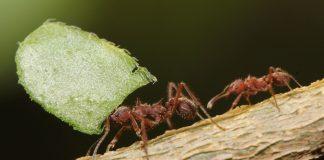 O ensinamento das formigas
