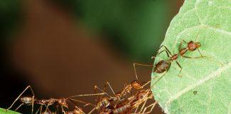 conquistar as coisas como as formigas